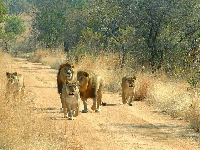 image credit: swangstours-safaris.com
