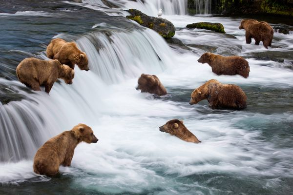 michael-melford-book-hidden-alaska-bears_33605_600x450