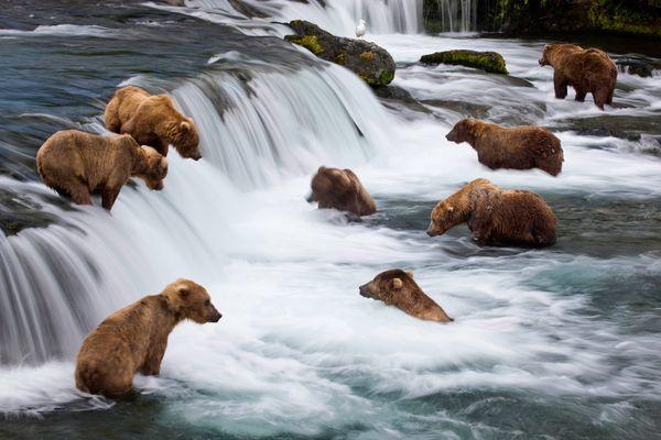 michael-melford-book-hidden-alaska-bears_33605_600x450