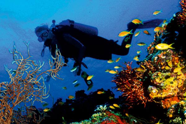 Image Source: nhatrangbeachvietnam.com